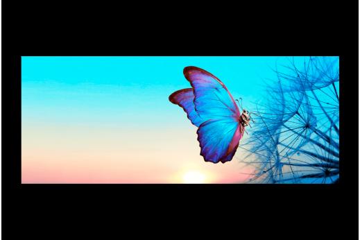 Картина Бабочка на одуванчике